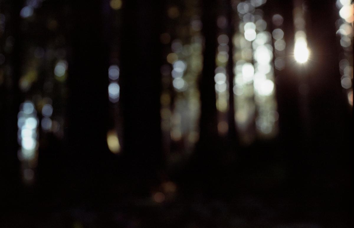 Ecola Trees 3