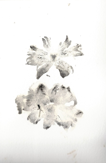 straw mushroom print